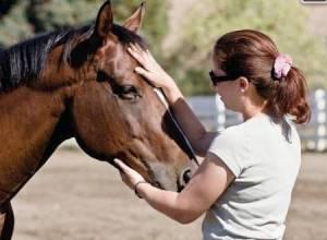 reiki cheval