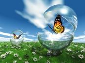 Les papillons et les fleurs